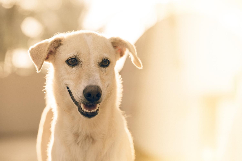 Sama-Dog-Dog-Stress-Reducer