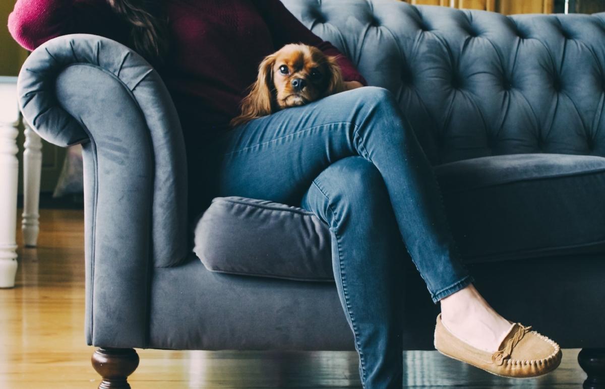 Sama Dog_Heal You Heal Your Dog.jpg