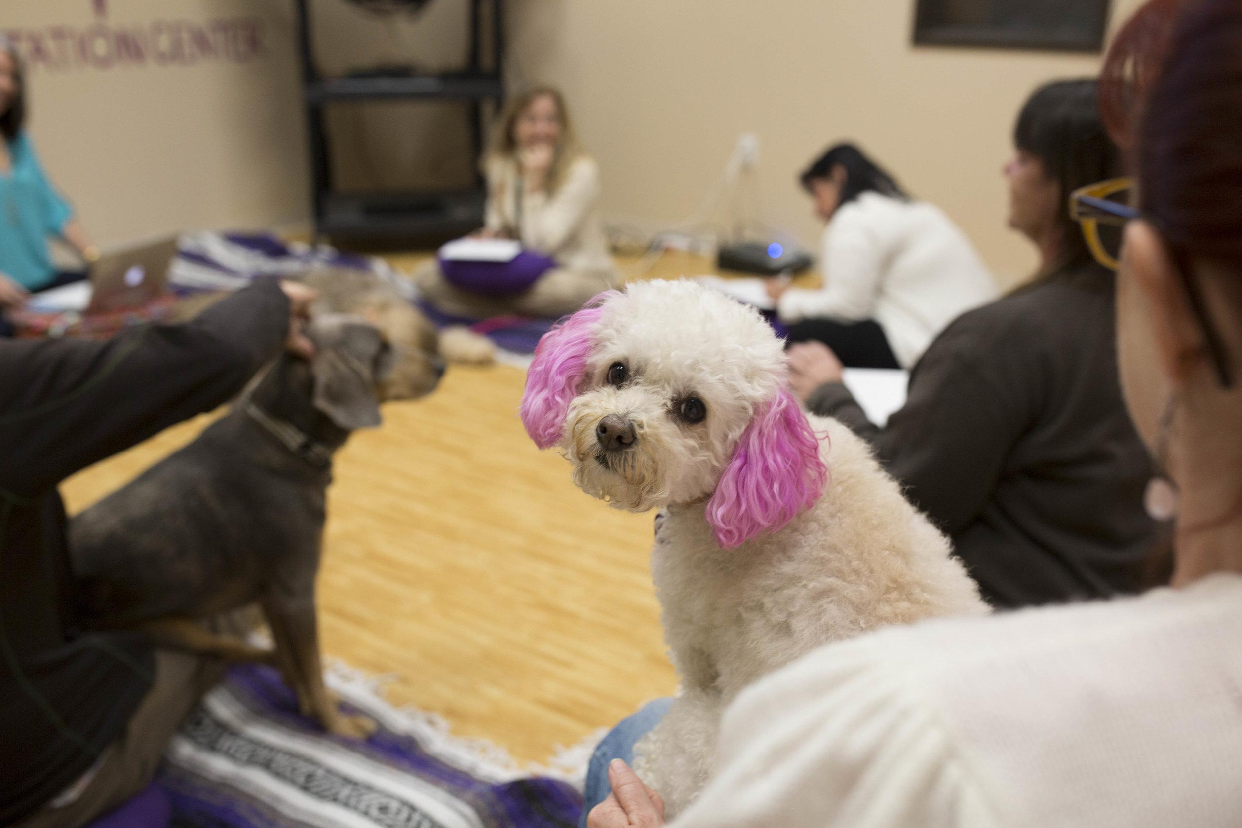 Sama Dog Wellbeing Workshop.jpg