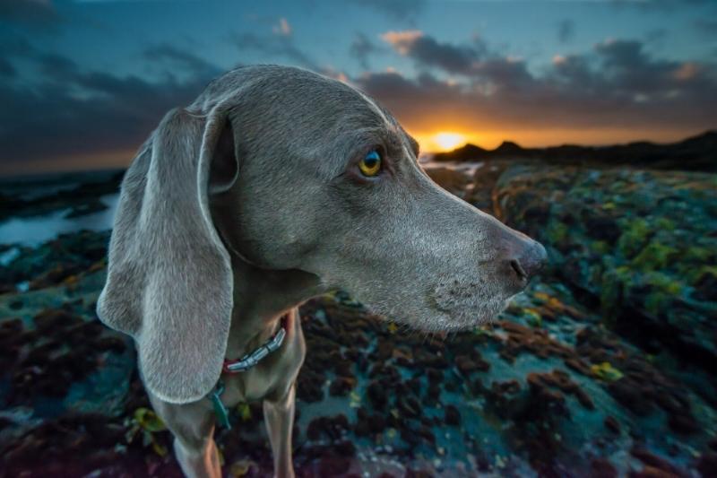 Sama_Dog_Dharma-of-Dogs