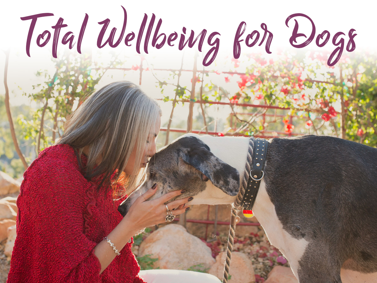Sama Dog_Total Wellbeing for Dogs