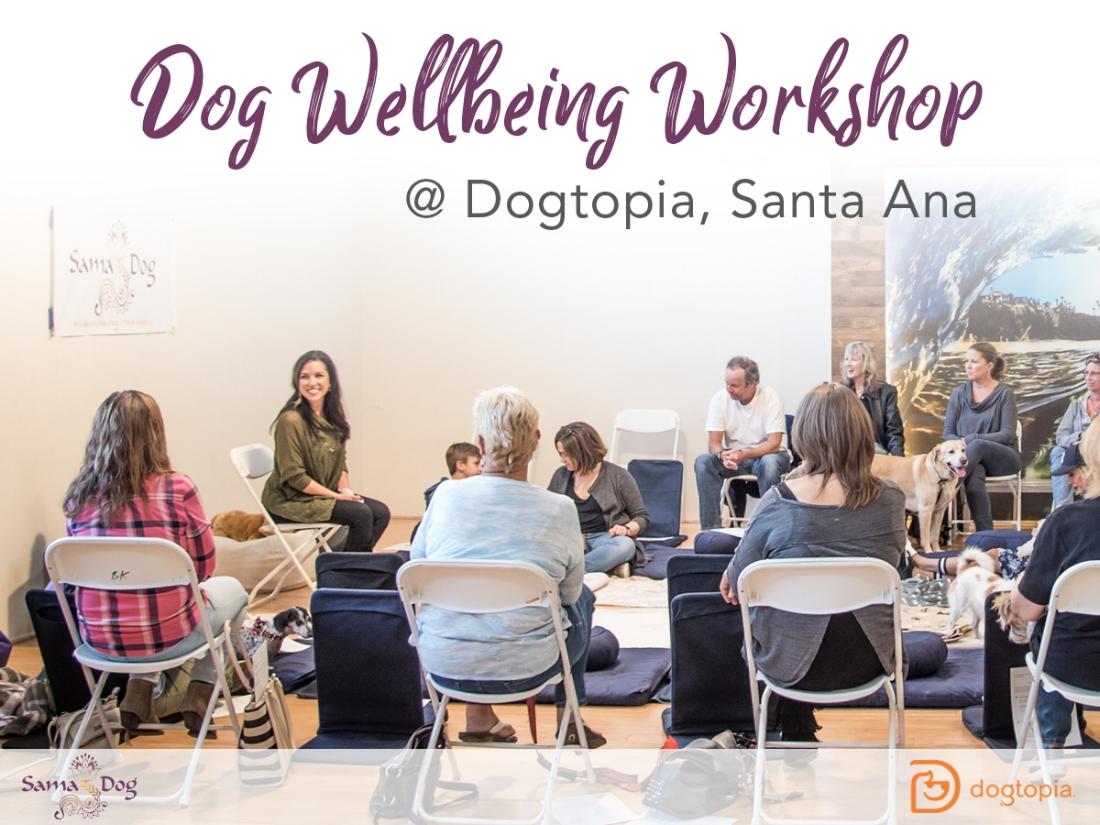 samadog_workshop_dogtopia_graphic-1200x900-vers2 (2).jpg