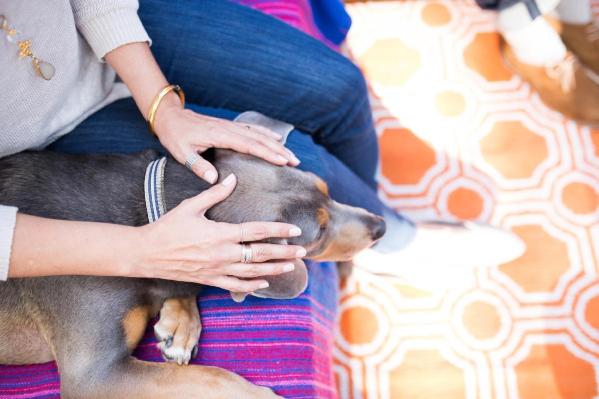 Sama_Dog_Energy_Healing.jpeg