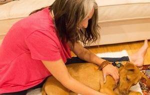 dog+massage+amanda.jpg