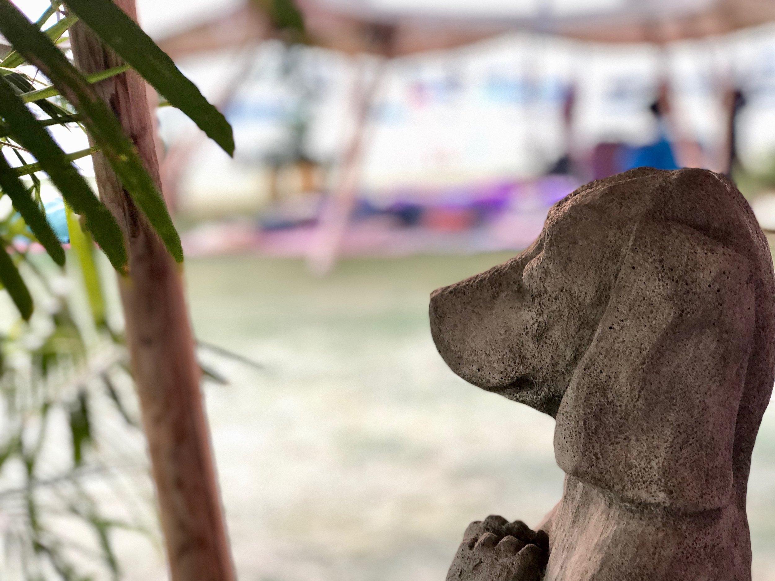 Sama Dog Home 6.jpeg