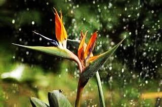 We needed some rain ✌️️