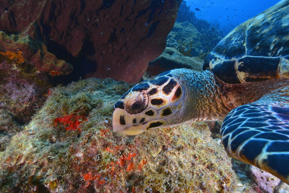 Seabed-Turtle-Animal-2840510.jpg
