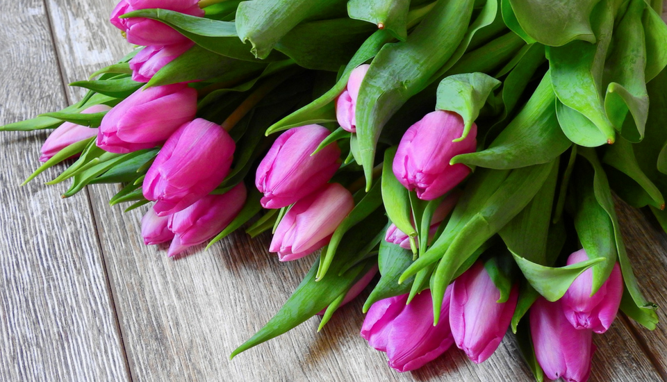 Mothers-day-flower-guide-tulip.png