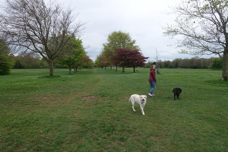 dogsitting in bristol april 2018.jpg