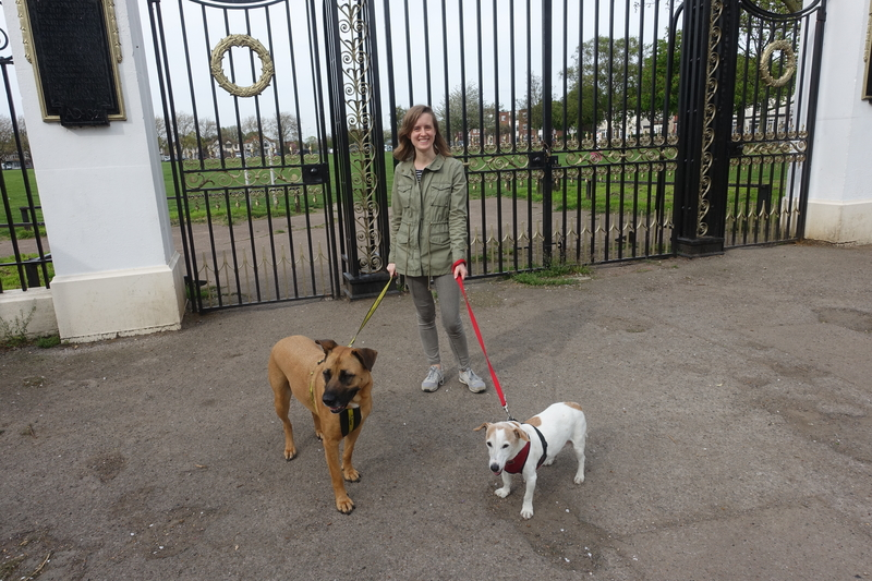 dogsitting in southend on sea england april 2018 5.jpg