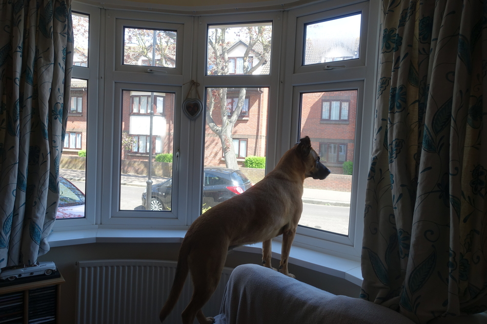 dogsitting in southend on sea england april 2018 15.jpg