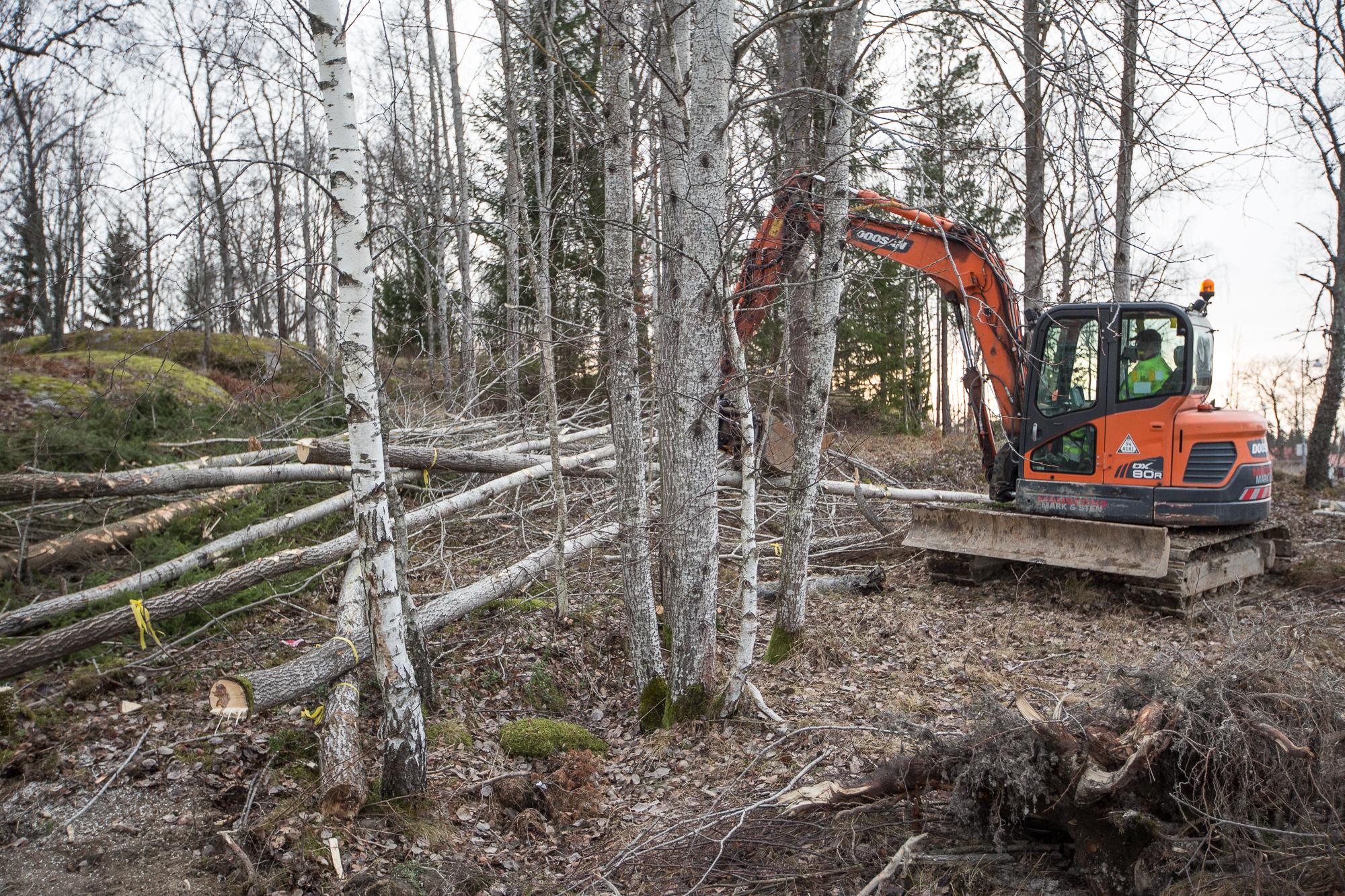 De flesta träd som ska ner är nu fällda. Kvar är bl a att plana ut tomten.