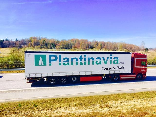 Vår sponsor  Plantinavia  levererar direkt från jord till tomt.