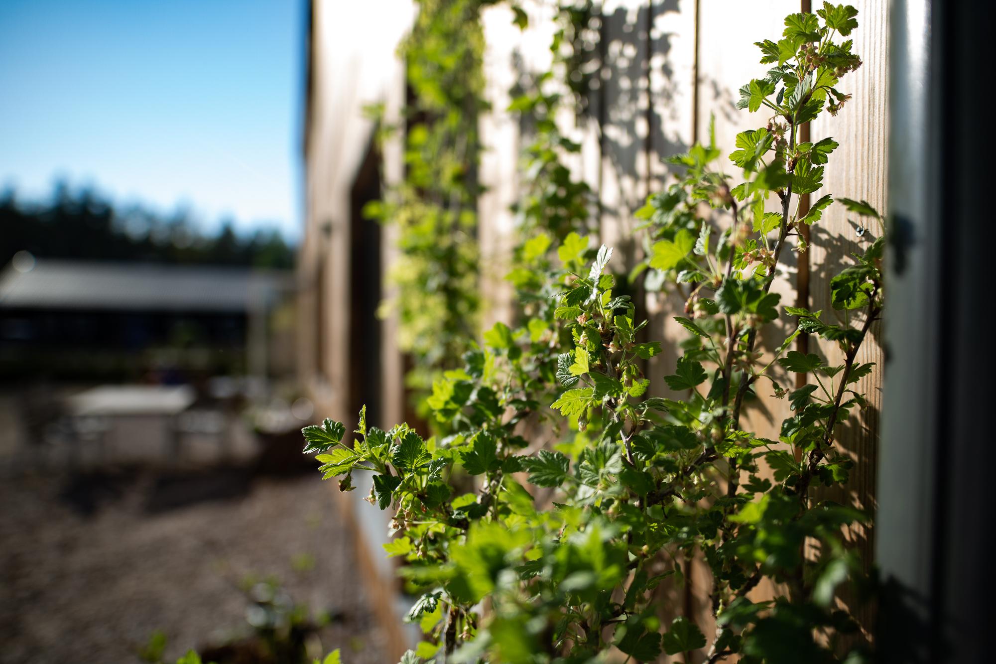Vi har köpt lite blommor, träd och buskar som ska ner i jorden, men vi ska höra med en trädgårdsmästare innan vi bestämmer var allt ska sättas nu när man ser hur tomten ser ut när den torkat efter vinter och vår.