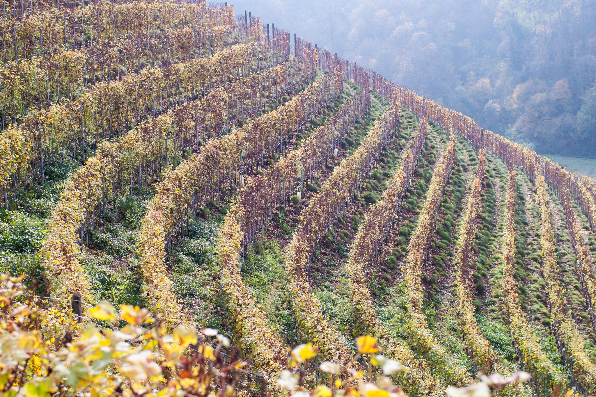Valmaggiore i november, etter innhøsting