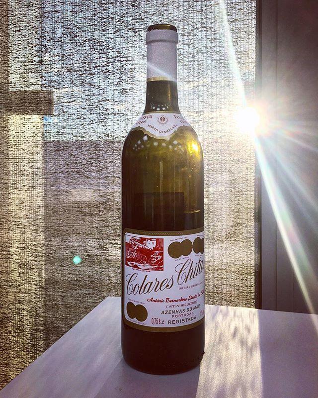 Ett av høydepunktene på Vinmonopolets pressesmaking i dag.  11. januar lanseres et parti av den portugisiske rariteten Colares Chitas 1999 i basiskategori 4.  Varenummer 3963301 kr 299,- #enotriavin #colareschitas #vinforum @vinforum.no