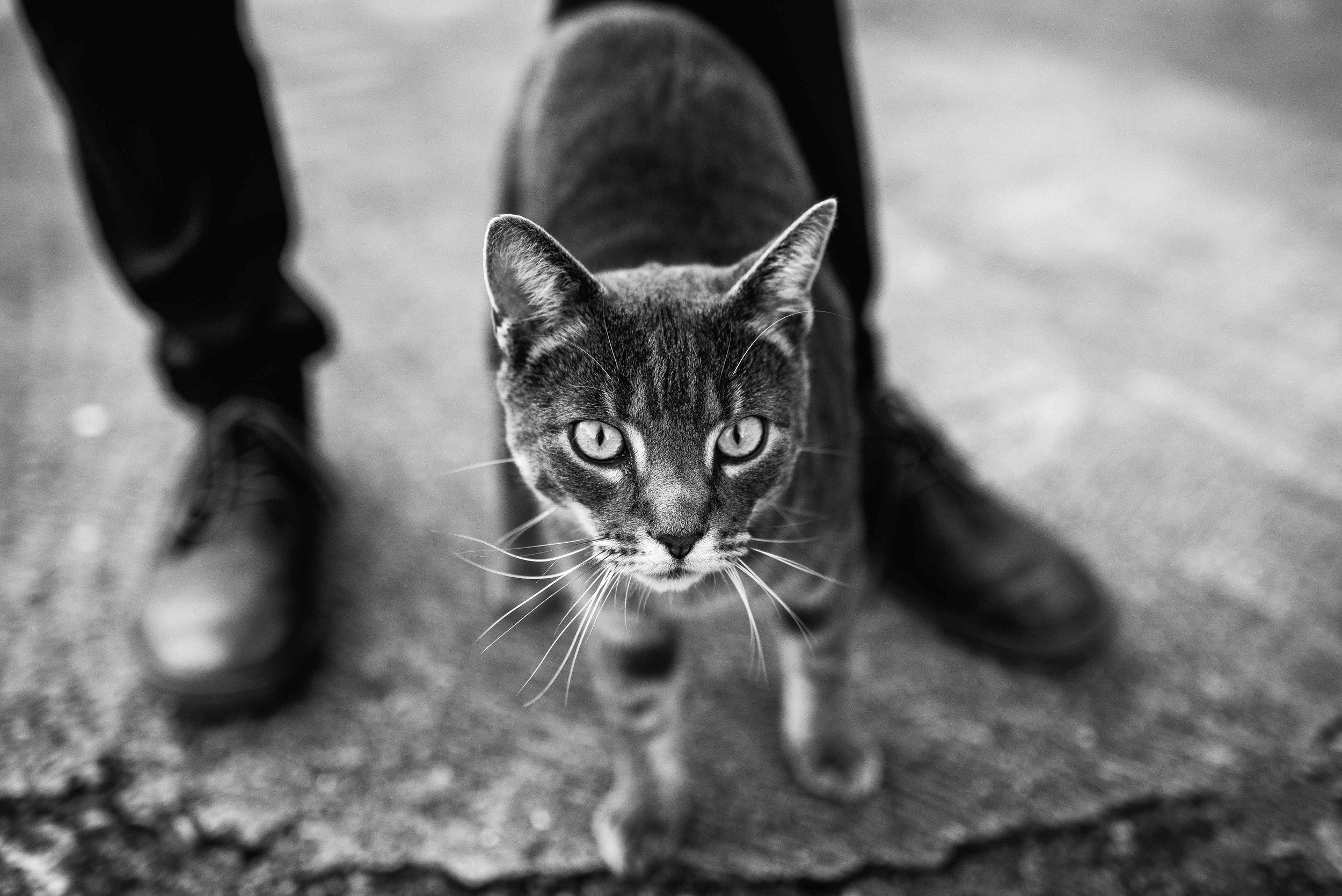 ©FoxMoonPhotography-187.jpg