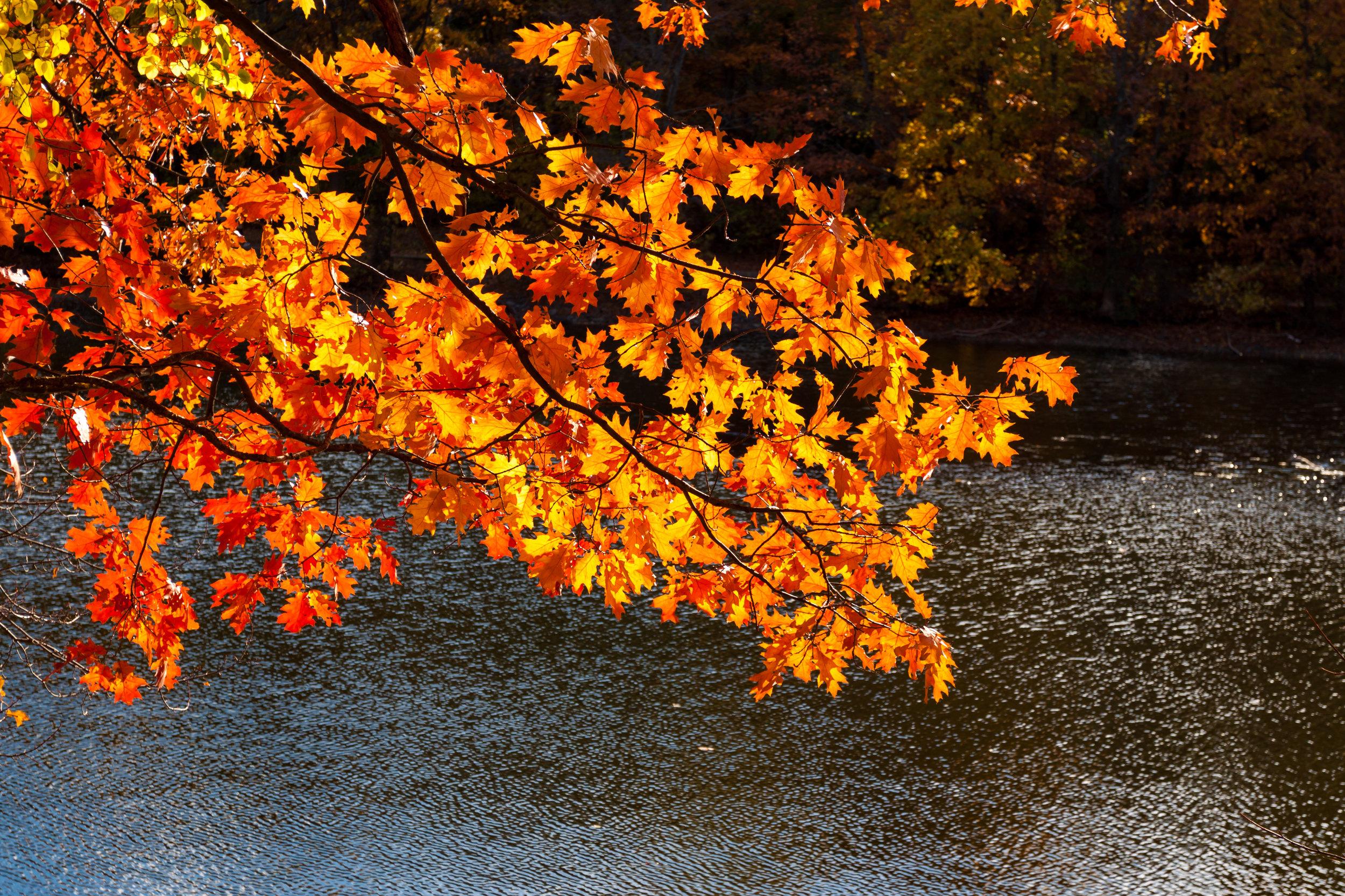 November Landscape-2.jpg