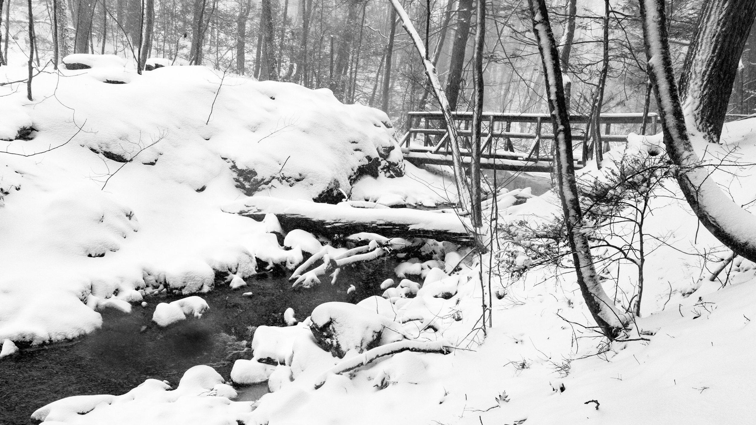 Winter Snow Shaker Glen-4.jpg