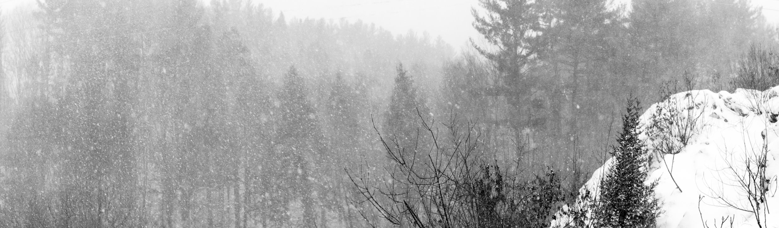 Winter Snow Shaker Glen-1.jpg