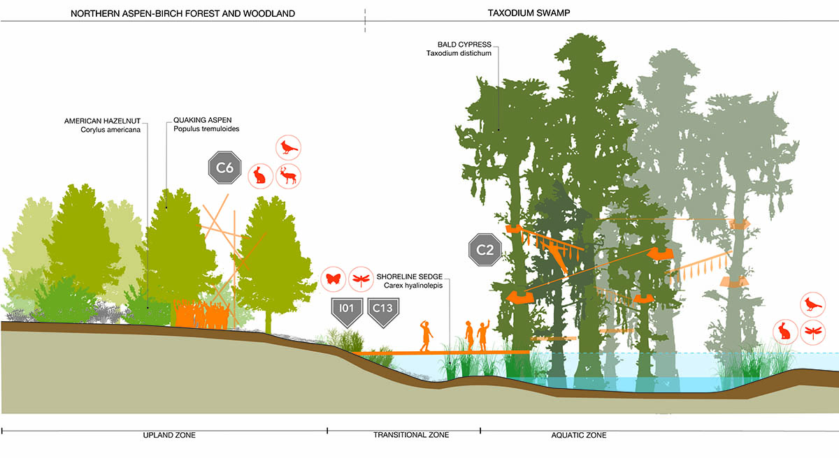 BLD_FargoProject_PlantCommunitiesSections_Northern Aspen-Birch Forests and Woodlands + Taxodium Swamp-01.jpg