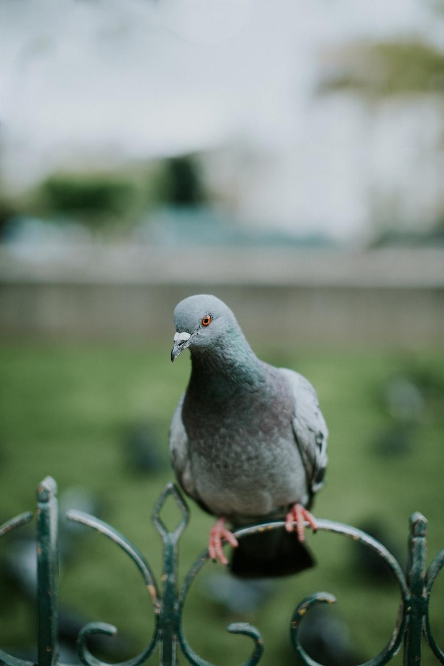 paris-travel-photography_0805.jpg