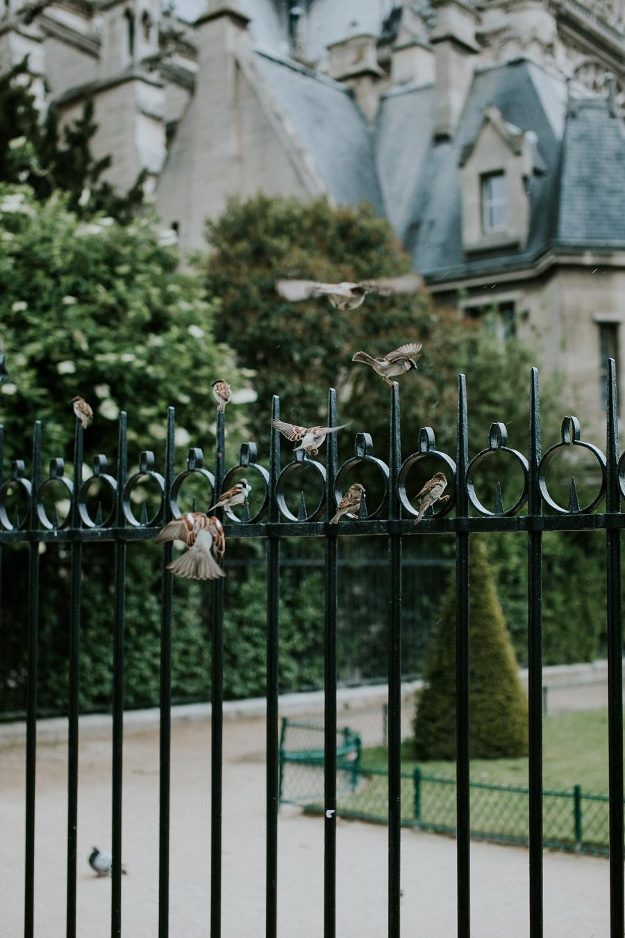 paris-travel-photography_0816.jpg
