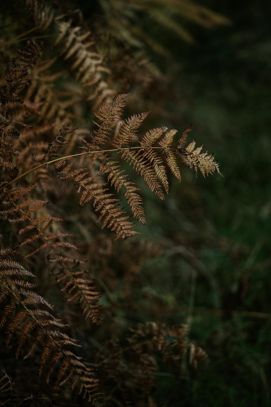 scotland-travel-photography_1263.jpg