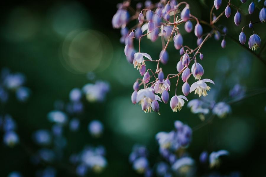 Open-Garden-Sigridsminde_2458.jpg
