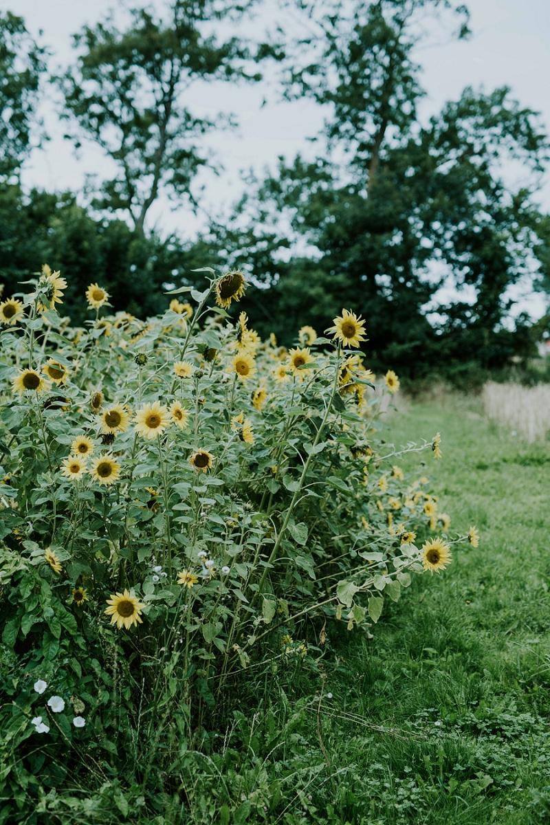 garden-photographer_1138.jpg
