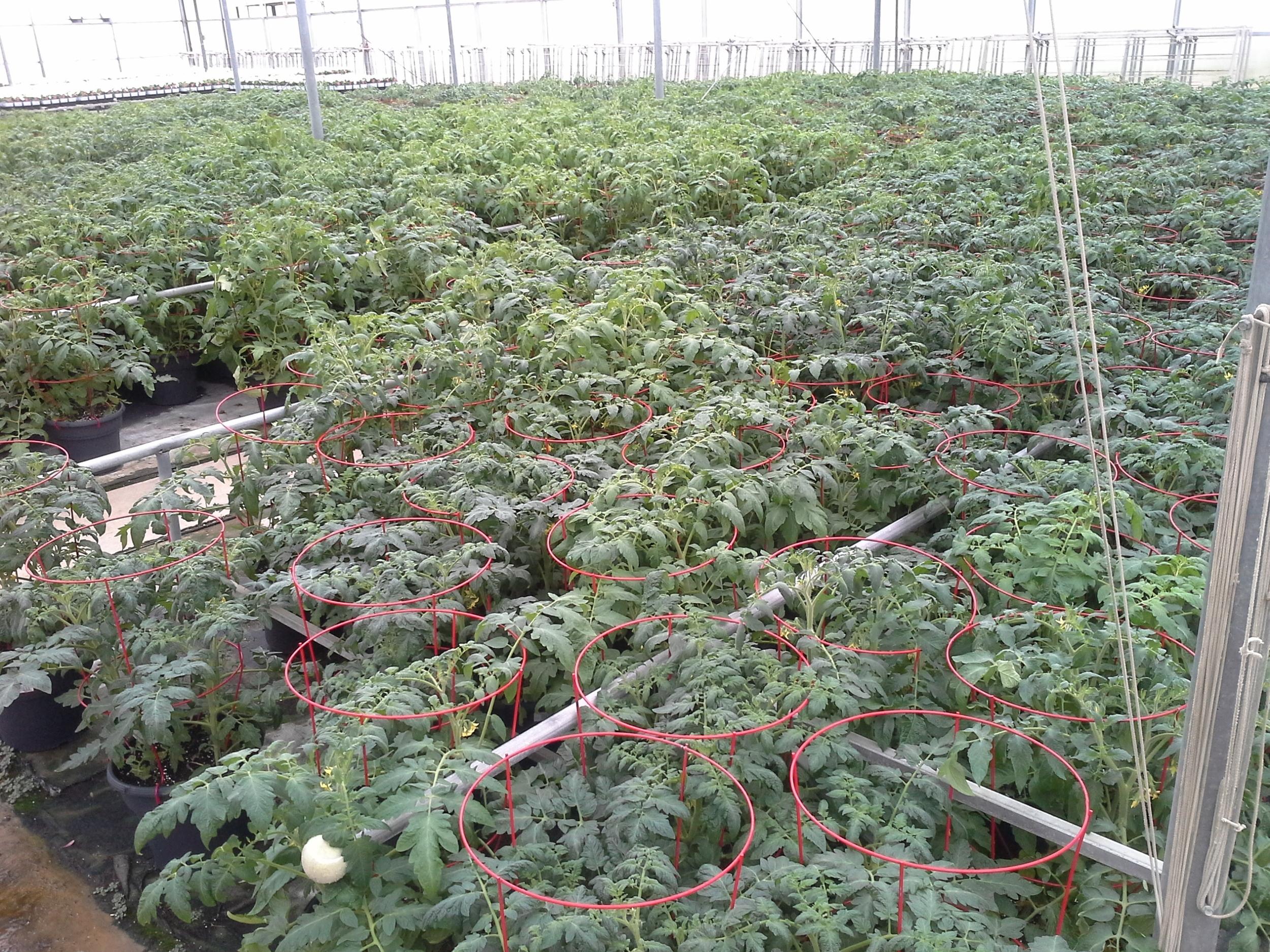 D12 Vegetable w Cage Kens wk 19 (1).jpg
