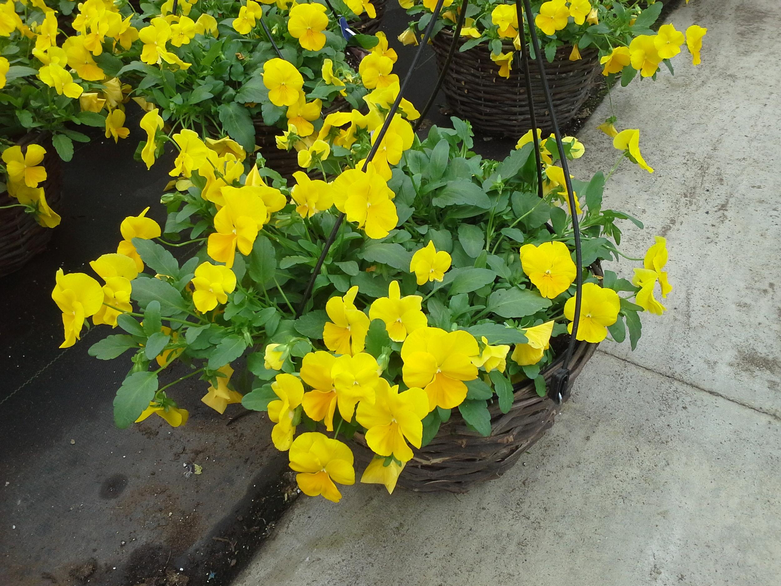 Flowertime wk14 (9).jpg