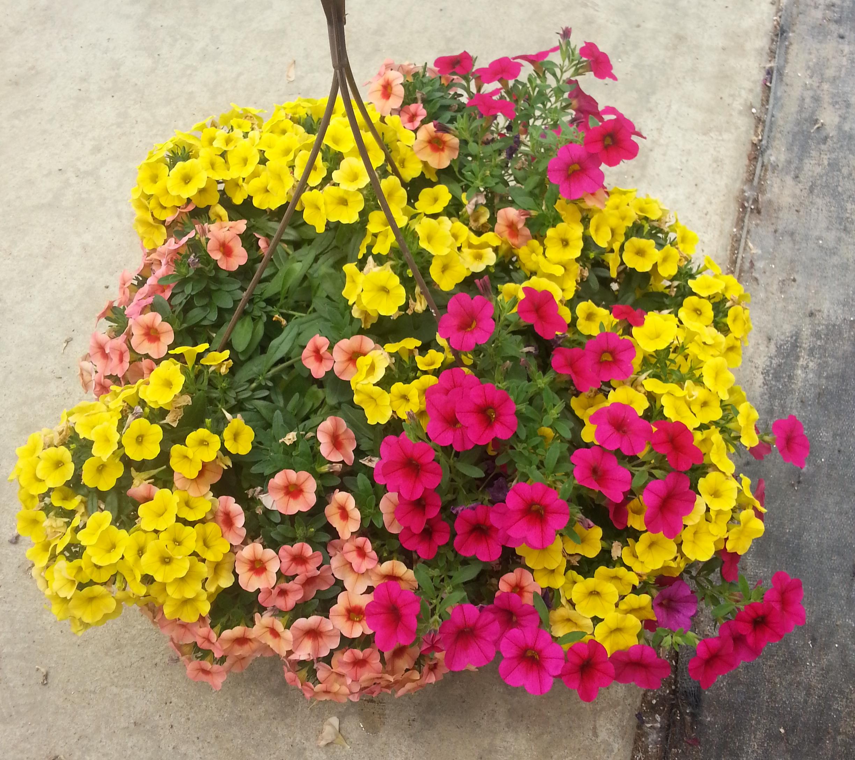 Flowertime wk24 (5).jpg