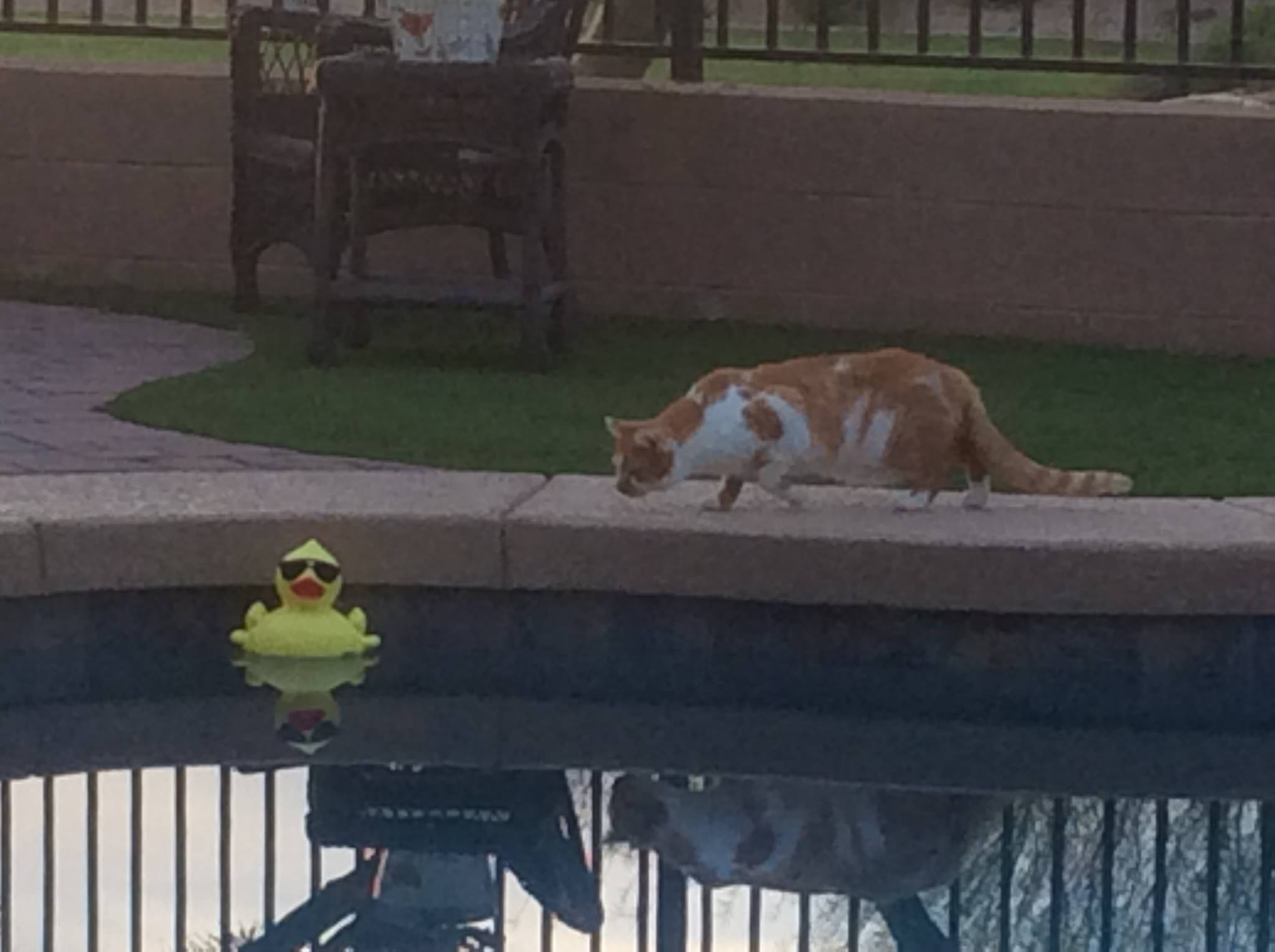 cat-by-pool