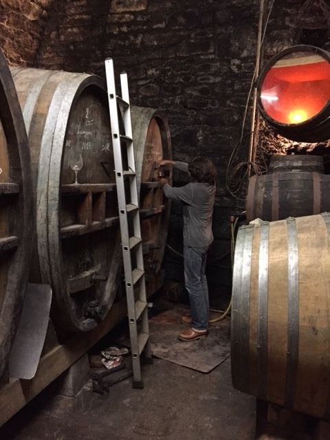 BORNARD in Cellar 1.jpg