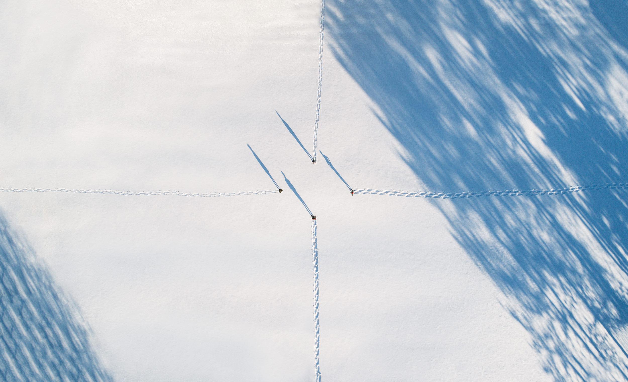 Snowshoe-2500px.jpg