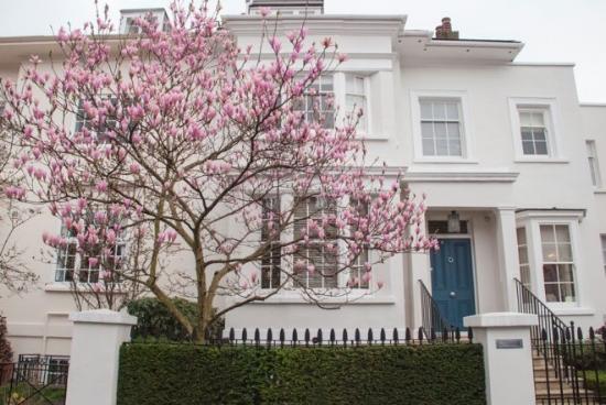 Albert-Place-Kensington-London-Magnolia-Blossom.jpg