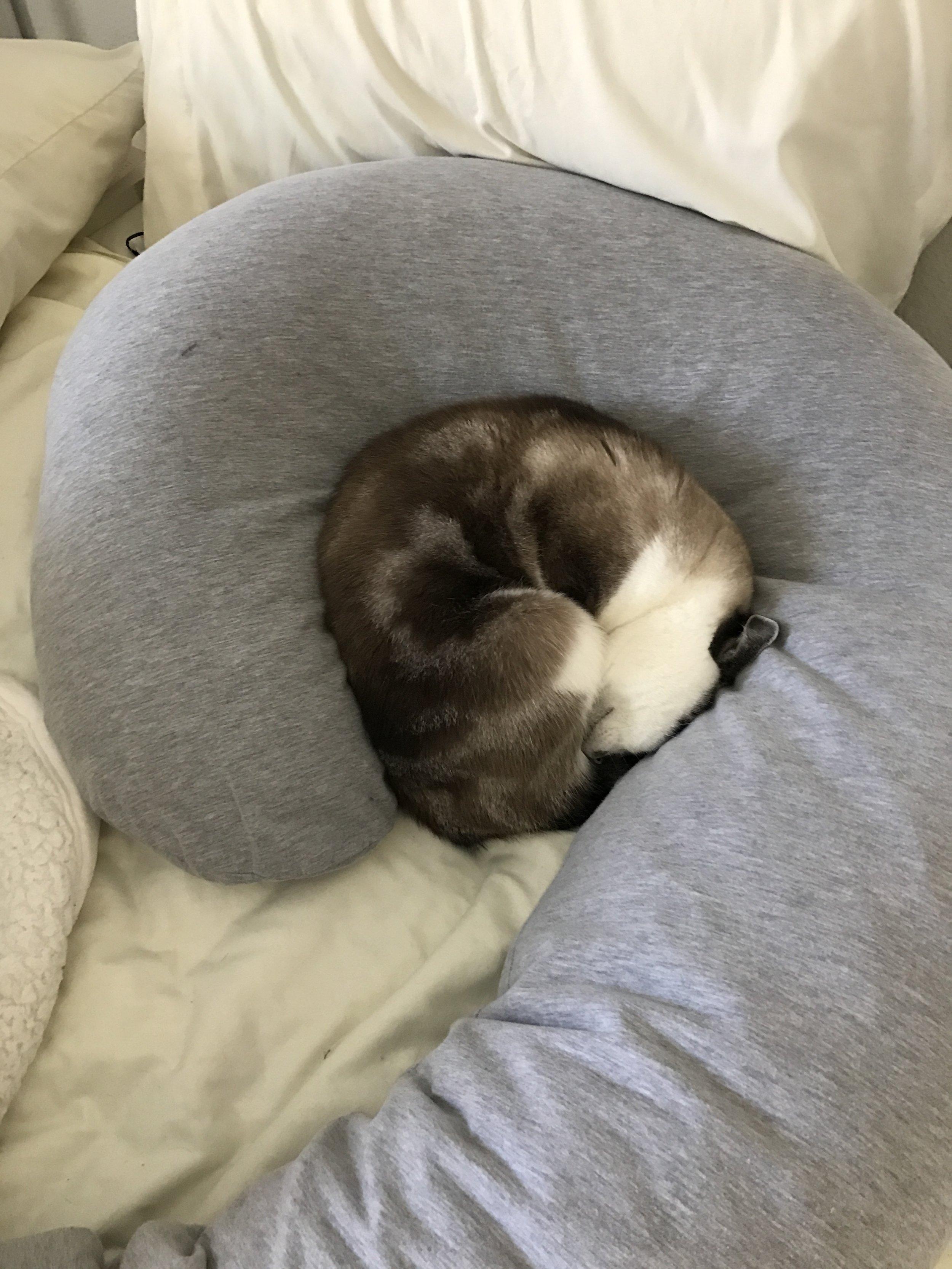 Even my pregnancy pillow isn't safe!