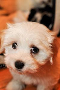 sad-puppy_5213549678_o.jpg