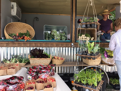 Hanging at the COOP Farmstand today @eatery66 with local cherries from @toppfruits and veggies from us and @circleagarden... soon to be joined by Laid Back Beef with grass finished beef and pastured chicken. .... Open Monday's 3-7 in Ridgway .... Local food for local folk from our farms to your table.