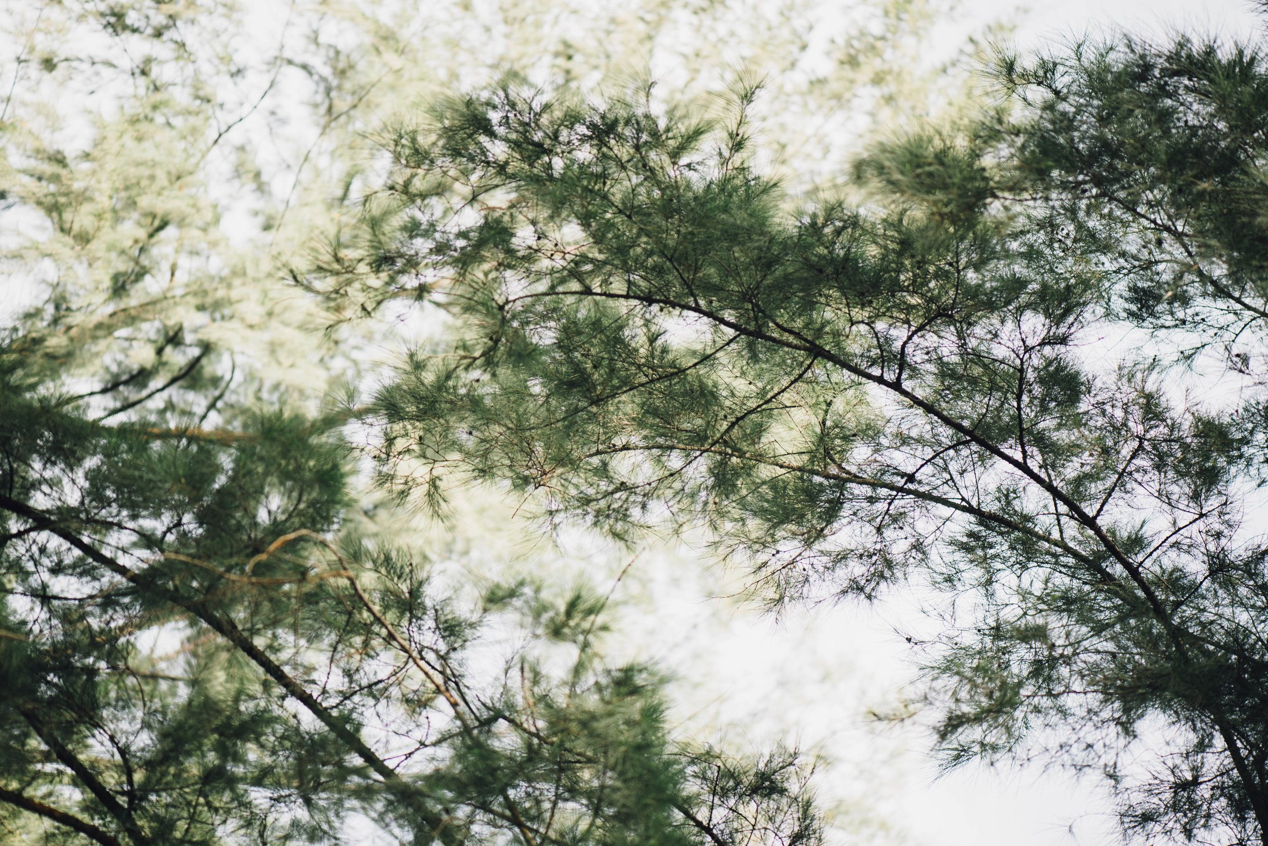 FOREST_3.jpg