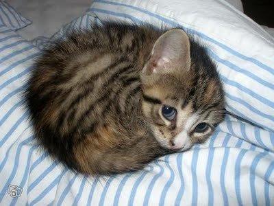adorable-animals-baby-baby-cat-beautiful-Favim.com-288405.jpg