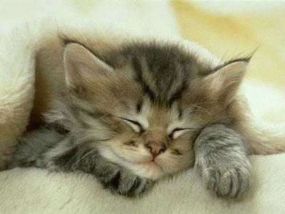 aww-cat-cute-kitten-Favim.com-452131.jpg
