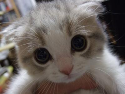 adorable-animal-animals-beautiful-Favim.com-590908.jpg