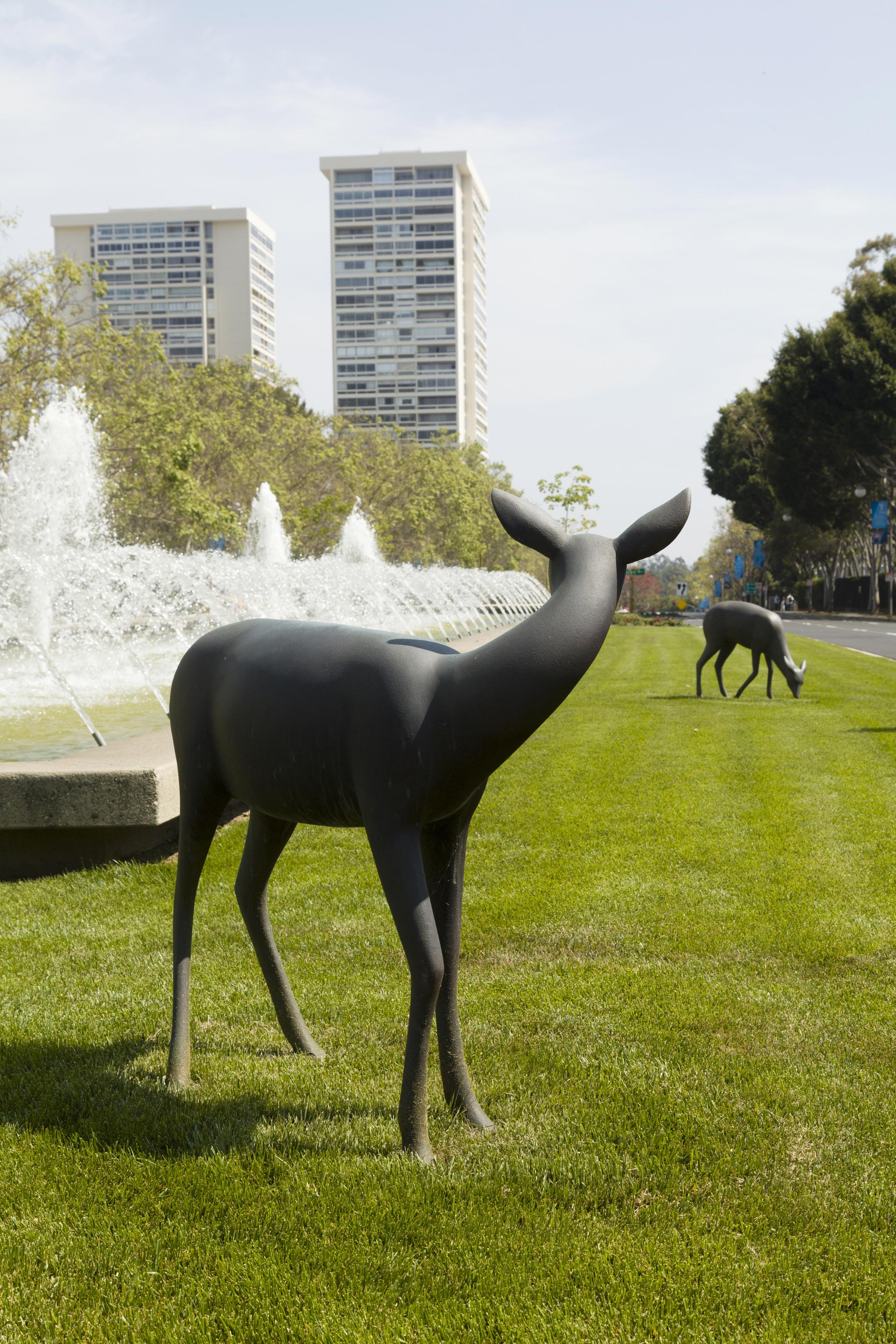 Deer 9