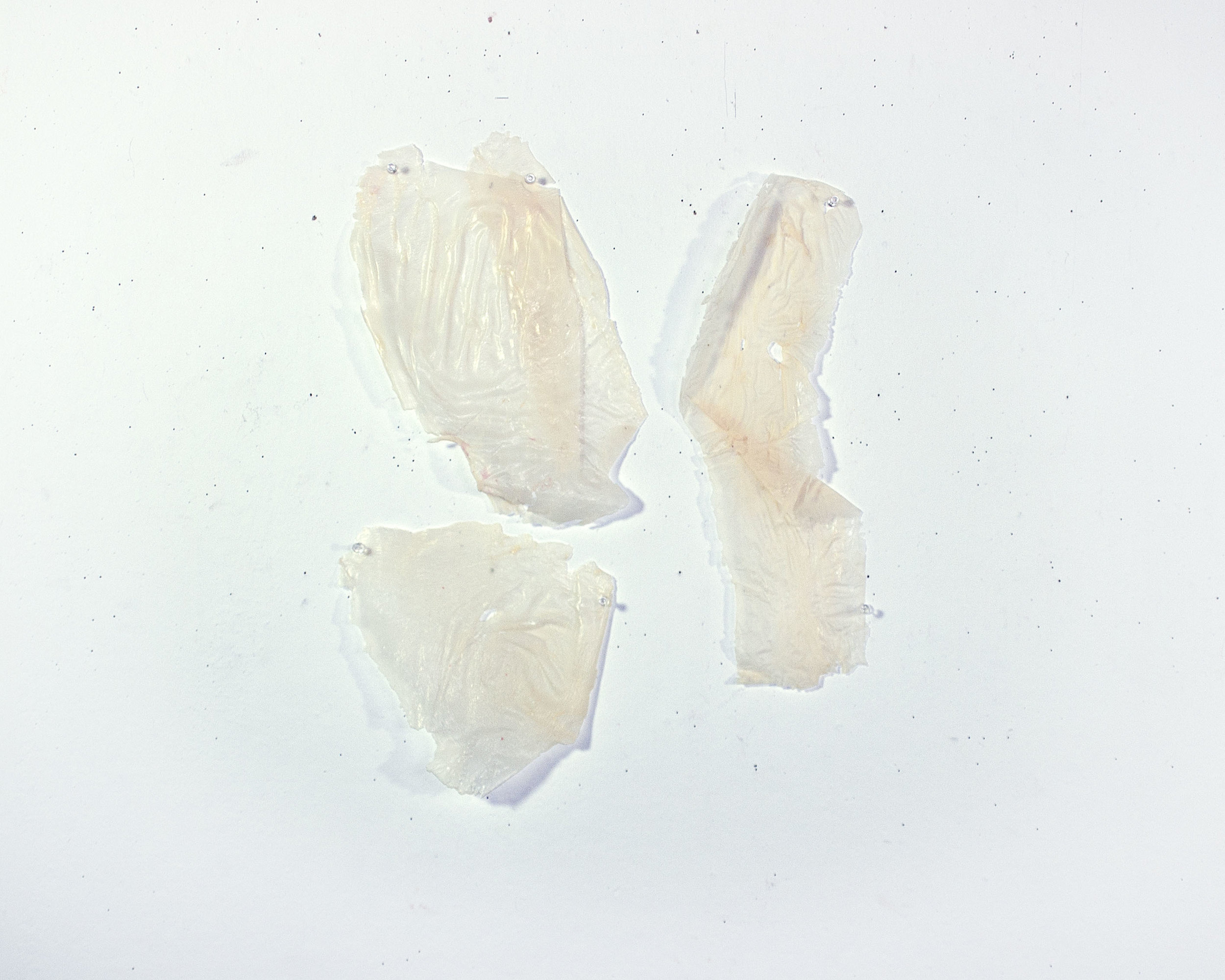 Glue Limbs