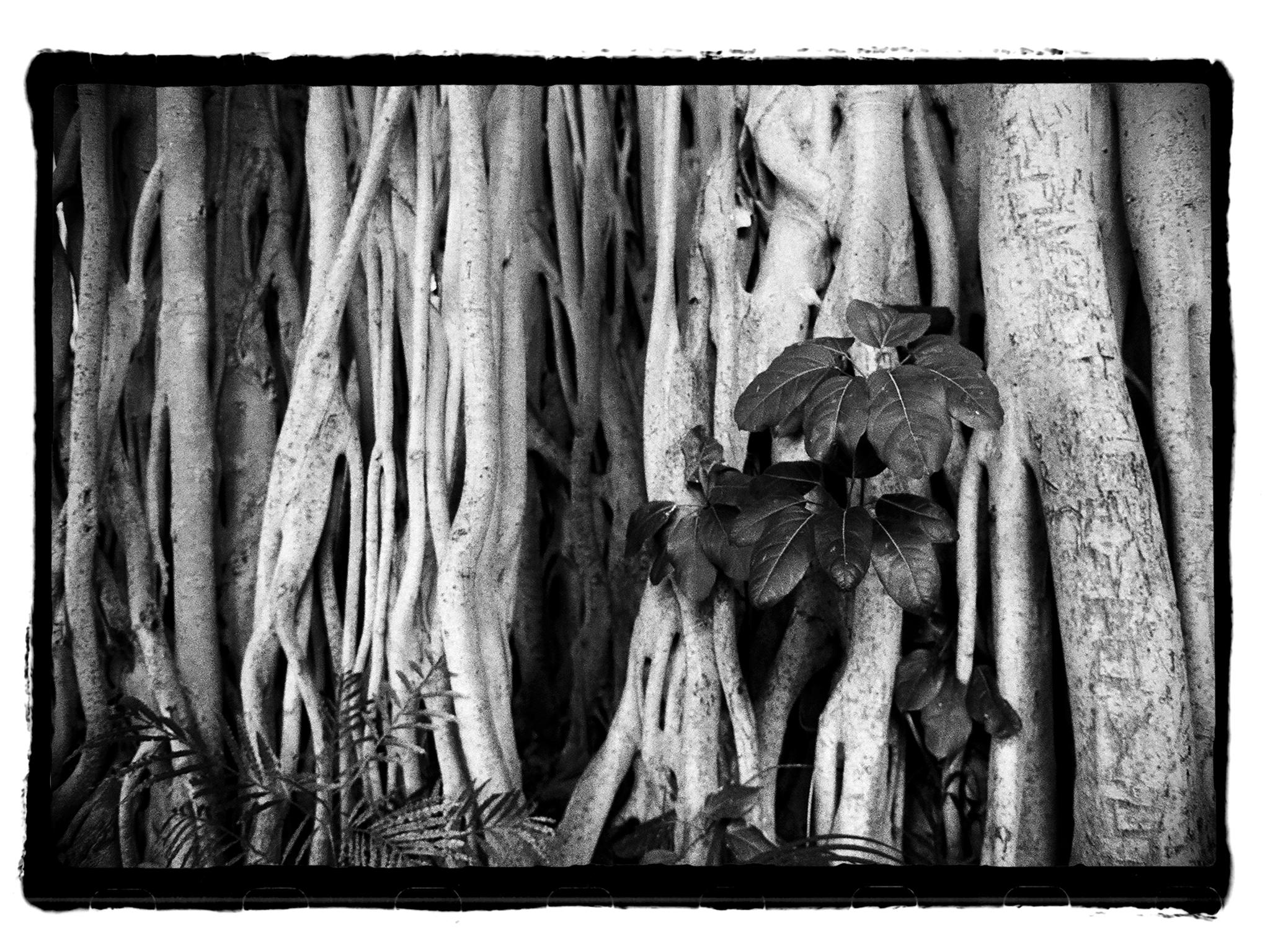 film-banyantree-border-blog.jpg