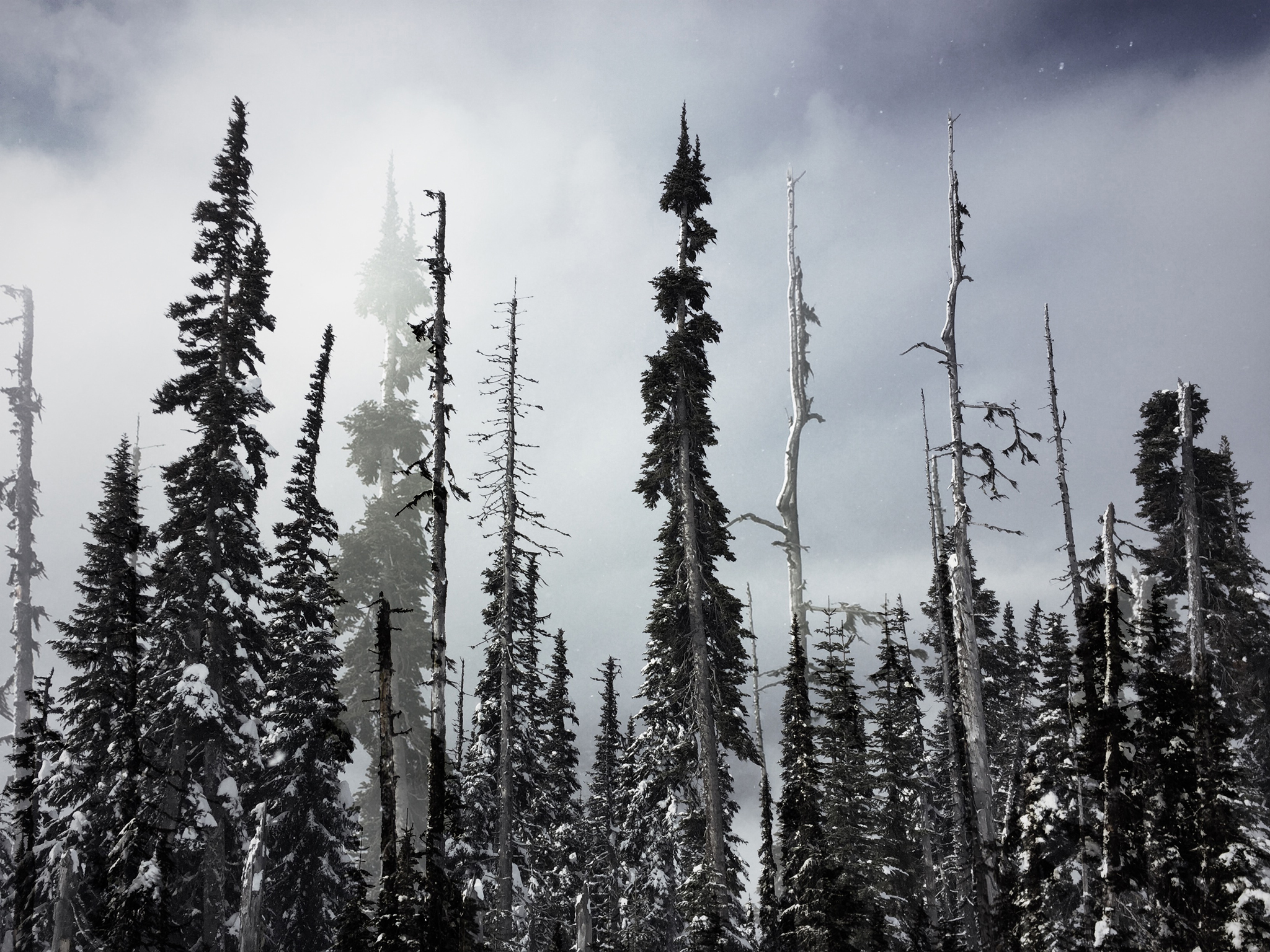 whistler-doubleexpotrees-final.jpg