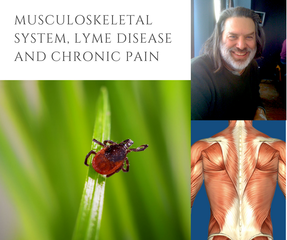 This course covers the muculoskeletal system in-depth as well as addressing ailments of the system. Matthew looks at the underlying conditions of muscle and bones and related ailments.  This workshop also addressing chronic and acute lyme disease from a western herbalism perspective.