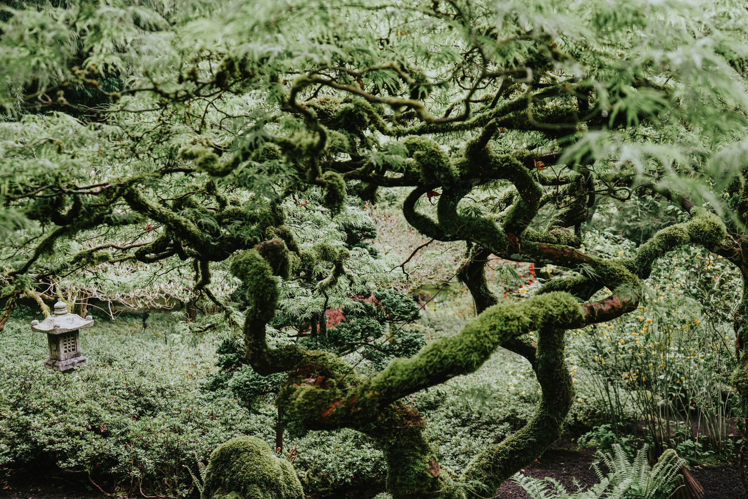 mossonserpentinebranches.jpg